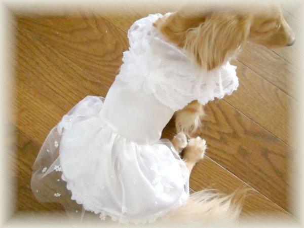 画像1: ウェディングドレス/パーティドレス (1)