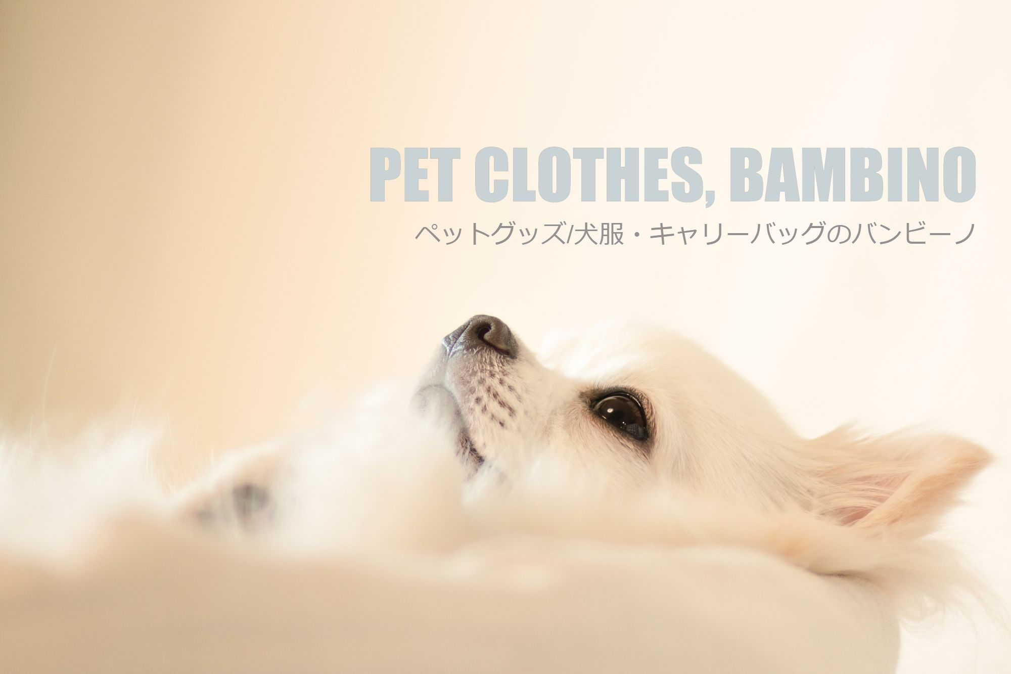 pet_clothes
